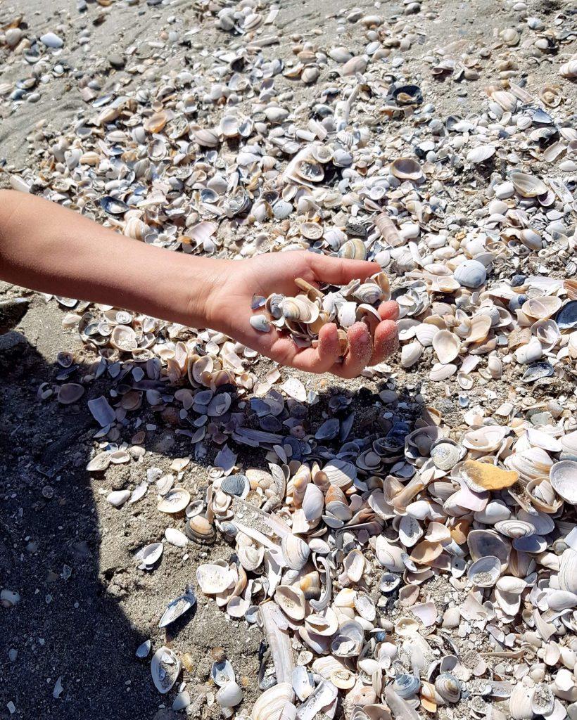 Muscheln am Strand von Hoek van Holland