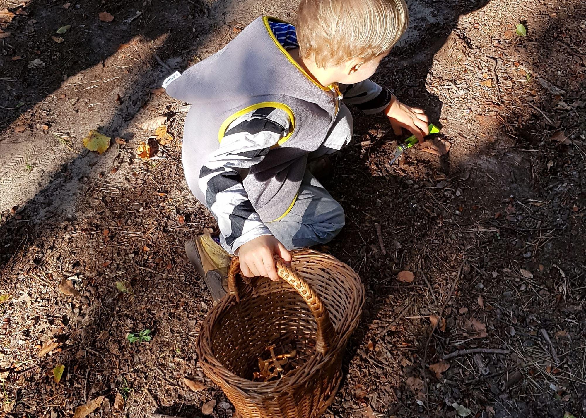 Pilze sammeln im Wald - ein Spaß für Kinder