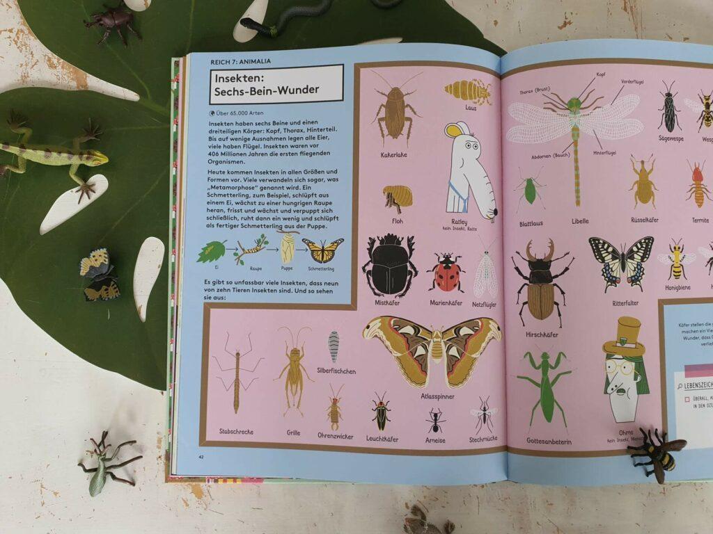 Dieses Sachbuch mit Comic-Elementen nimmt neugierige Kinder ab 8 Jahren mit auf ein ganz und gar erstaunliches Abenteuer in die Natur und Alltag. Zusammen mit dem Detektiv Sherlock Ohms erfahren kleine Forscher alles vom Urknall und die sieben Zeichen des Lebens. Auch Lebensraum, Fortpflanzung und Eigenschaften von Einzellern, Pflanzen, Insekten, Pilzen, Krustentieren, Vögeln und Wirbeltieren wird spannend unter die Lupe genommen.  #sachbuch #tierwelt #grundschule #lernen #kinderbuch #wissen